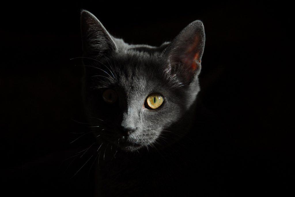 Cat Poking At Night