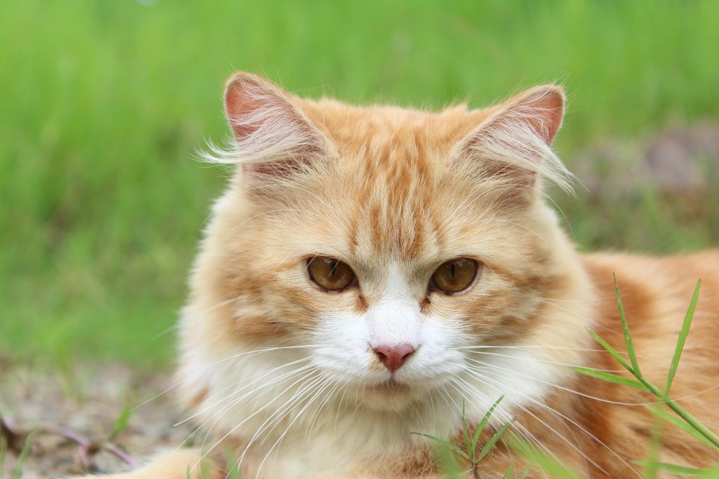 Cat Insurance Types and Coverage